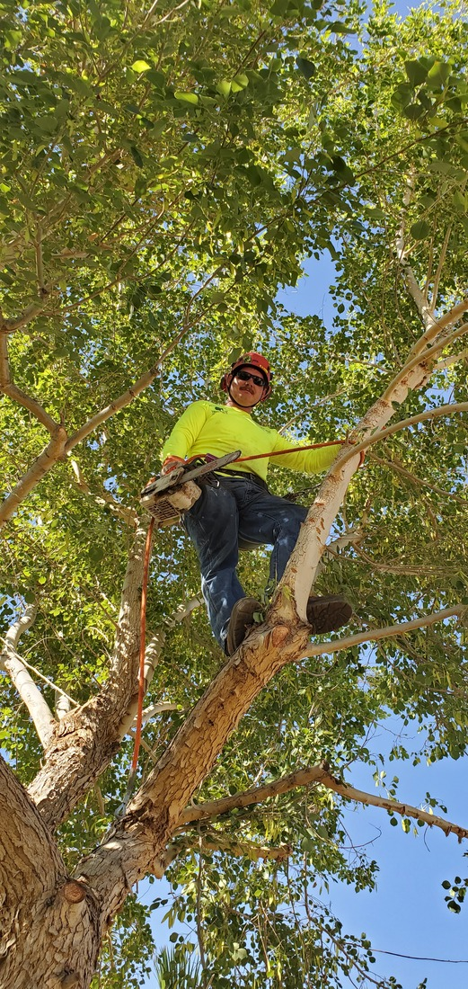 Tree Care Yuma, AZ